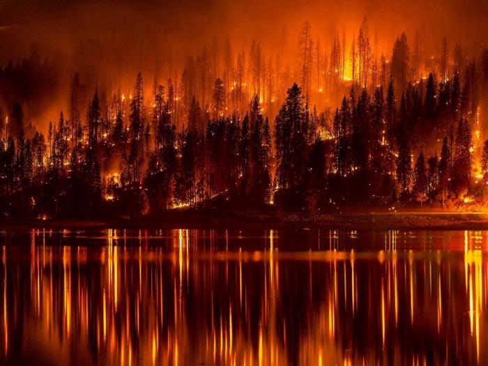 forest-fire-991479.jpg